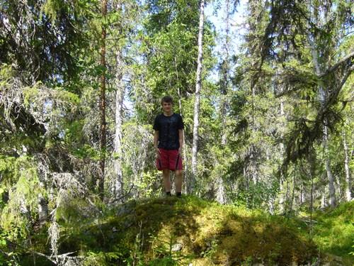 Финский лес в окрестностях Пуоланка
